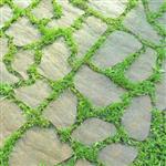 Thumbnail Petragarden