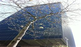 Thumbnail BNDES Bank's Main Building in the Center of Rio de Janeiro
